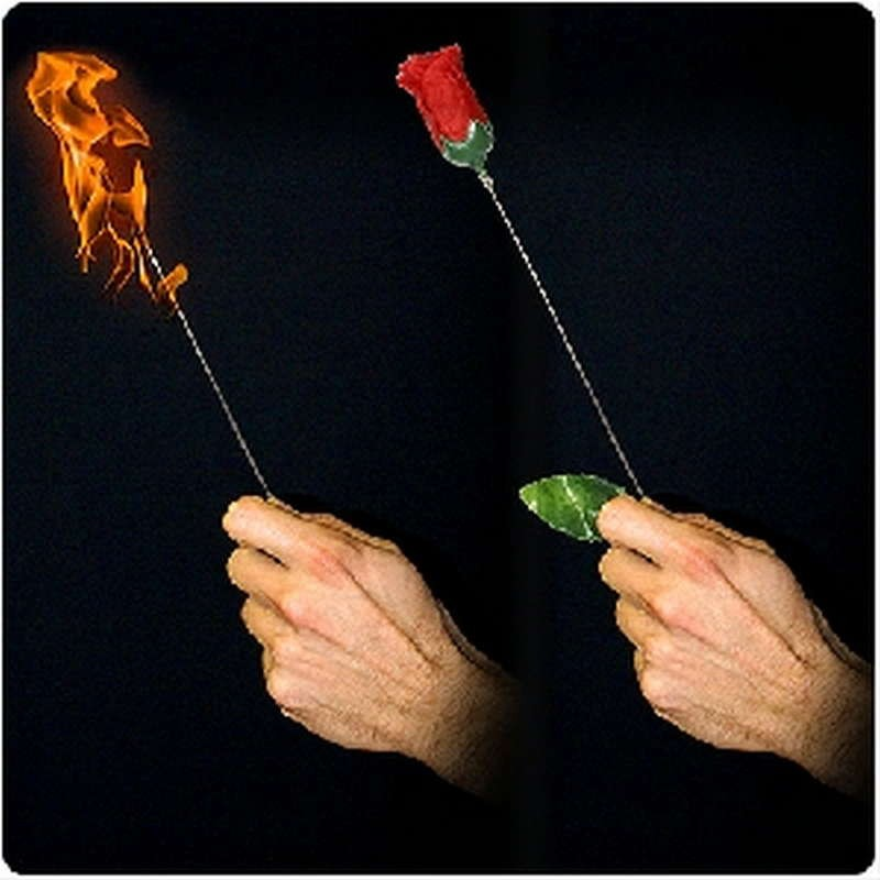 Torch to Rose – Plus